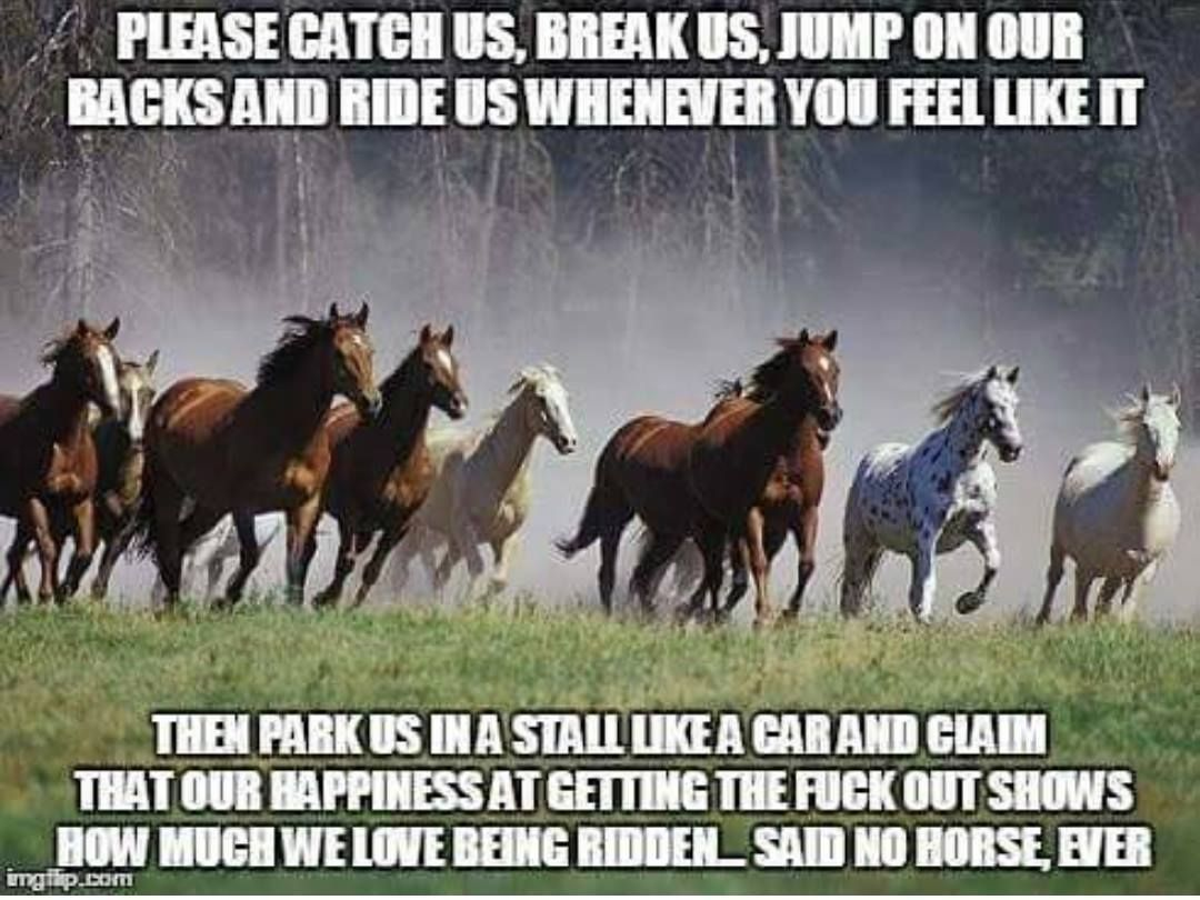 All The Pretty Horses Essay science technician cover letter ...