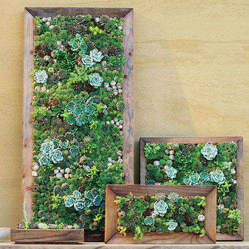 Make Your Own Living Succulent Art Living Walls Robins