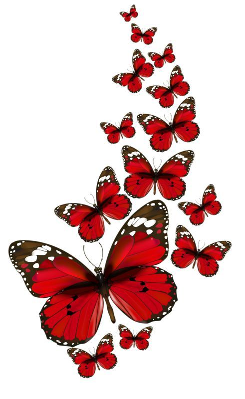 Butterfly Wall Decor Pattern