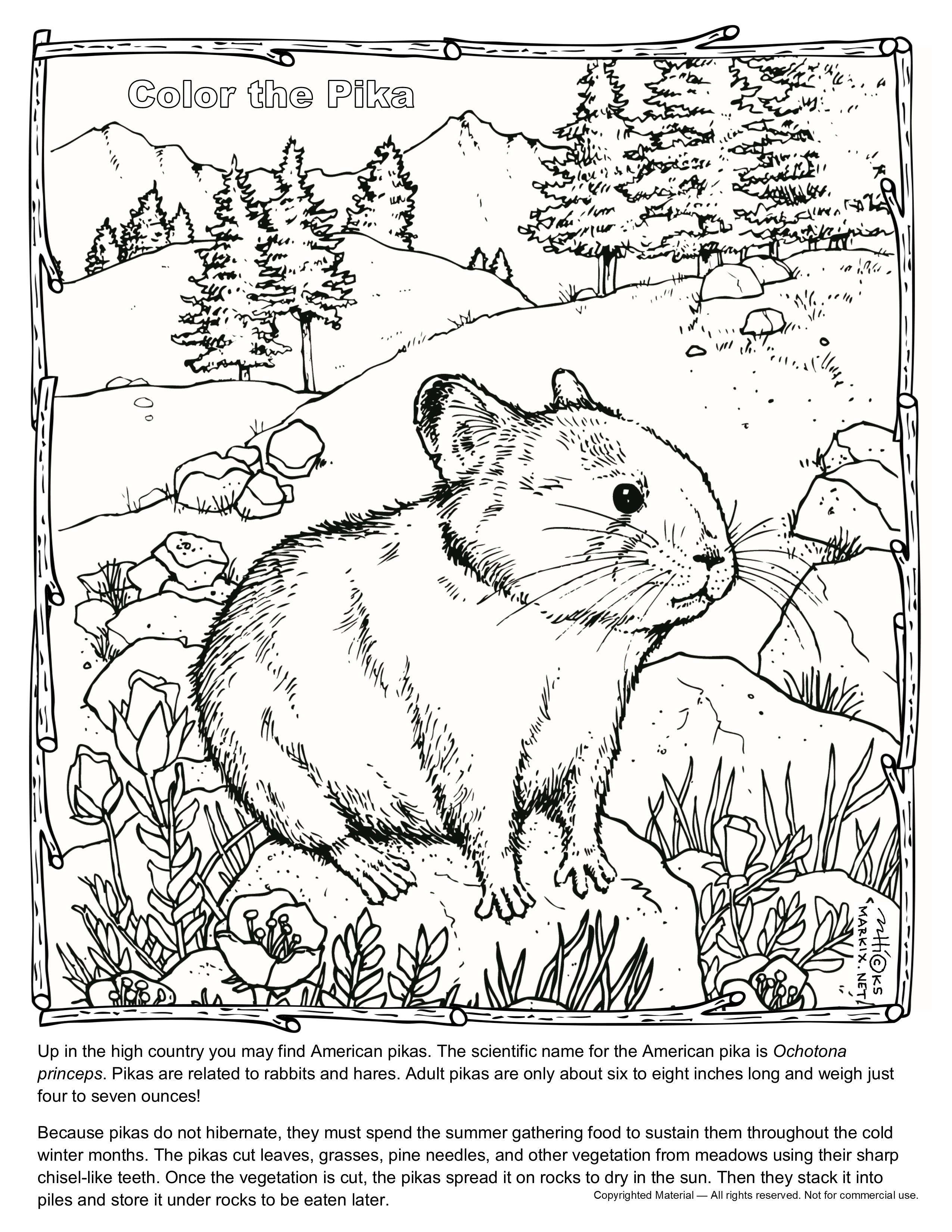 Pika Coloring Page Up In The Mountains You May Find American