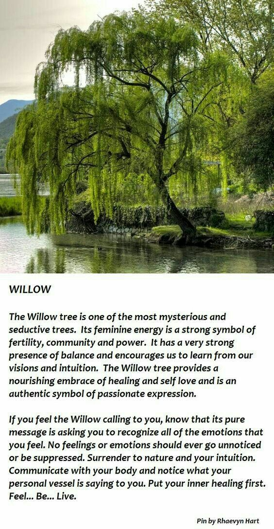 Spirituality Tatts Pinterest Willow Tree Weeping Willow