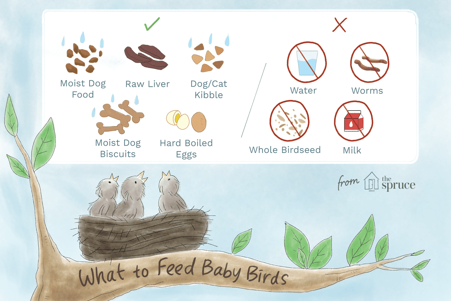 e4db6947a27904bebd719e837d6894f0 - How To Get A Wild Baby Bird To Eat