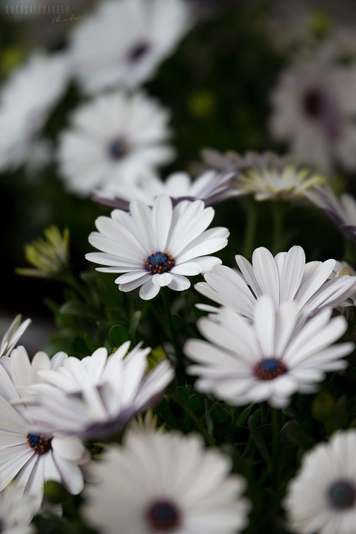 Flowers by Lucas Alexander on 500px