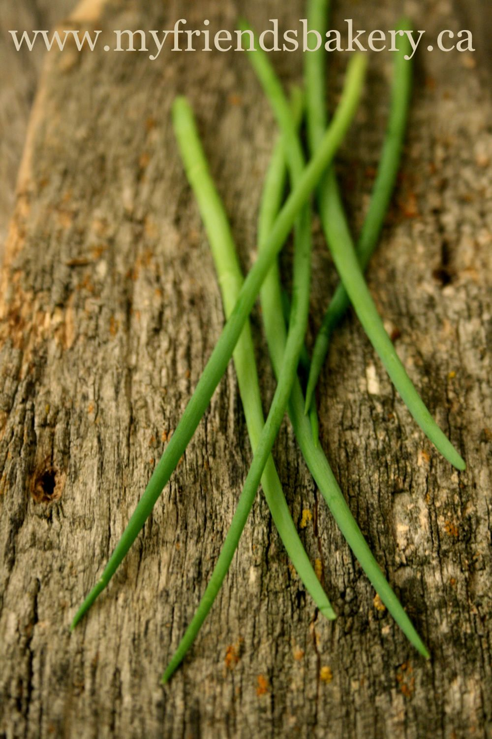 How to grow fresh green onions indoors all winter long