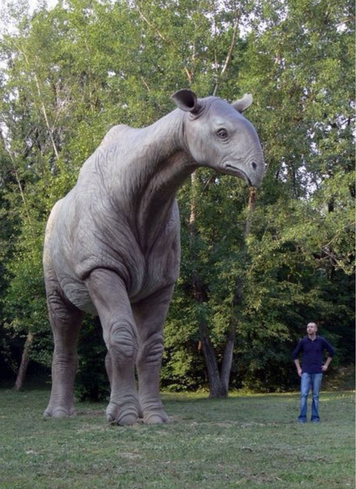 Pin on Bones (Dinosaurs, Fossils & Extinct Creatures)