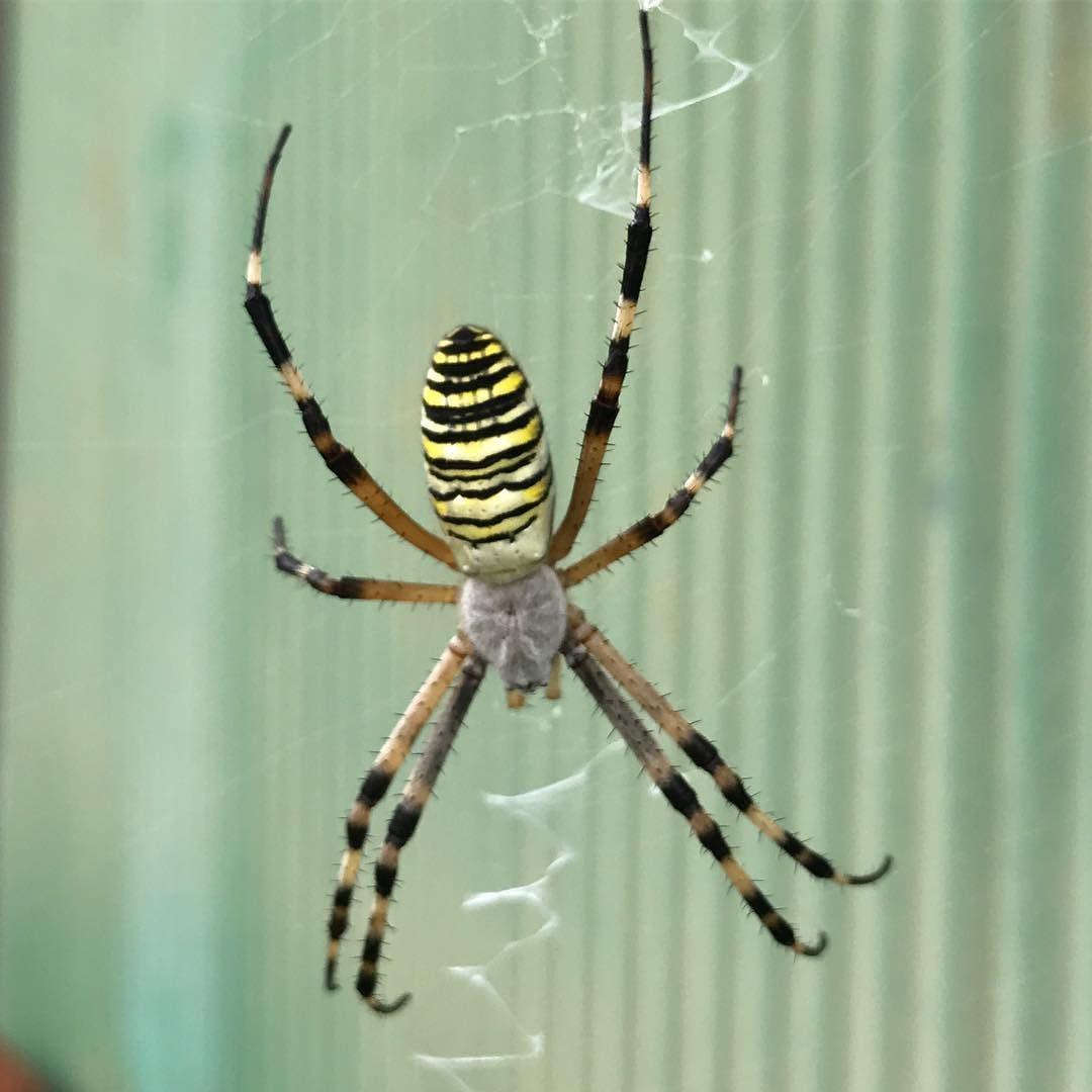 ボード 蜘蛛 のピン