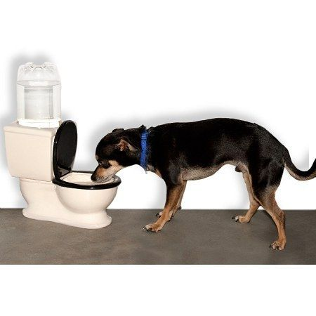 Toilet Dog Bowl Dog Water Bowls Dogs Pets
