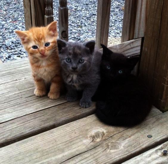 Cute Animals Video Clips that Cute Kitten Pictures