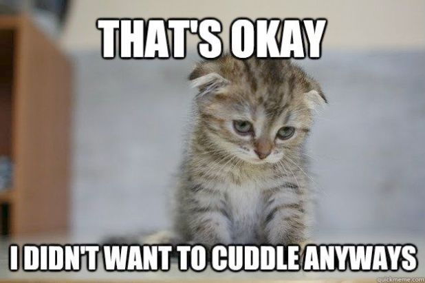 Cute Animals Playing Cutest Kittens Ever Book Cartoon Cute Animals How To Draw The Most Irresistible Creatures On The Funny Cat Memes Funny Cats Cat Memes