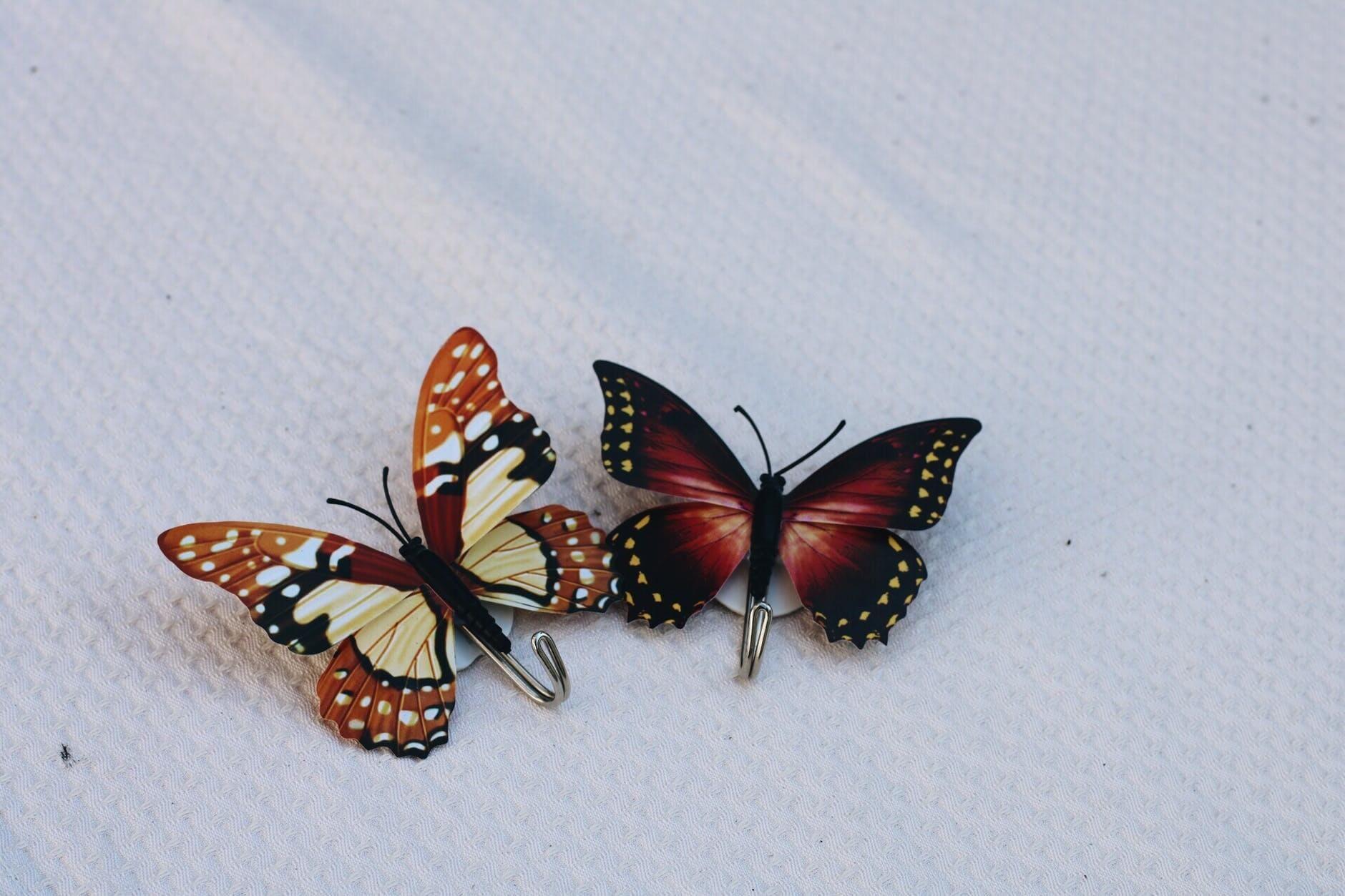 Hd Nice Color Butterfly Desktop Wallpapers Full Screen In 2020 Butterfly Photos Beautiful Butterfly Images Beautiful Butterfly Pictures