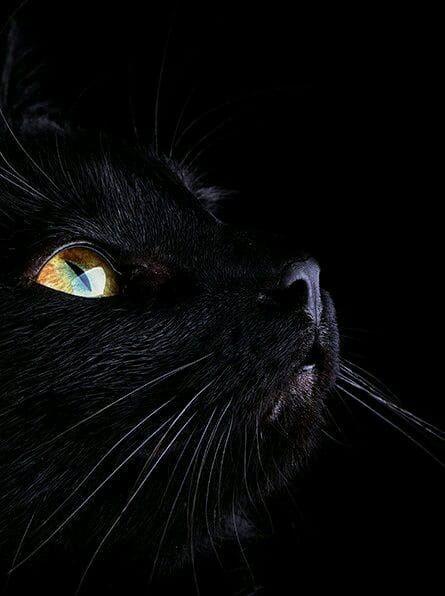 Pin by Gloria De la Guardia on B&W Cute cat gif, Cat