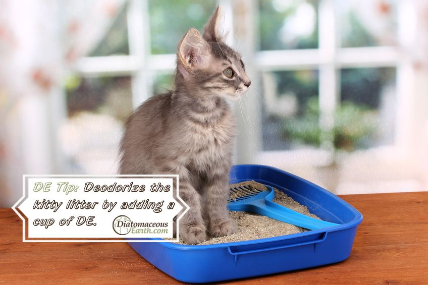 Diatomaceous earth kittens