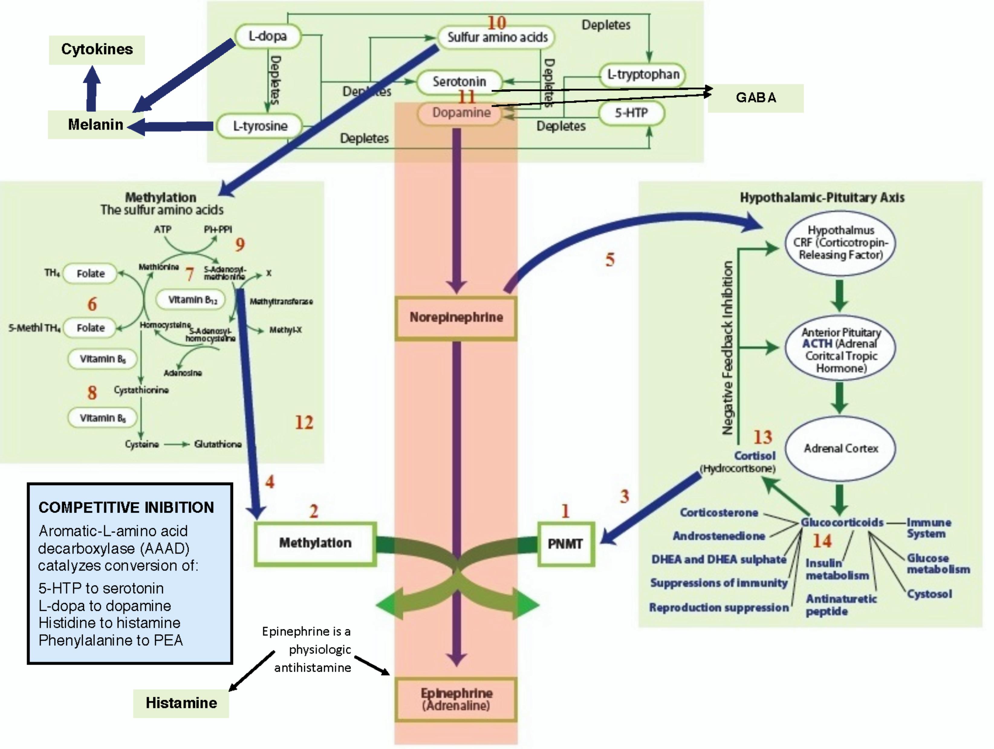 Biomedical Labs & Diagnostics Methylation, Tyrosine
