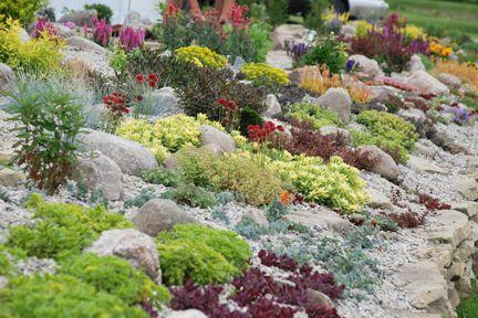 e4ddd2199ef4c3c473ad2c1beaa48963 Cannas Garden Designs With Sedum on garden design with liriope, garden design with delphinium, garden design with daylilies, garden design with rose bushes, garden design with bougainvillea,