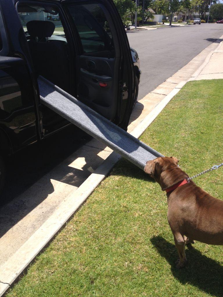 Inexpensive doggie ramp dog ramp for truck dog ramp