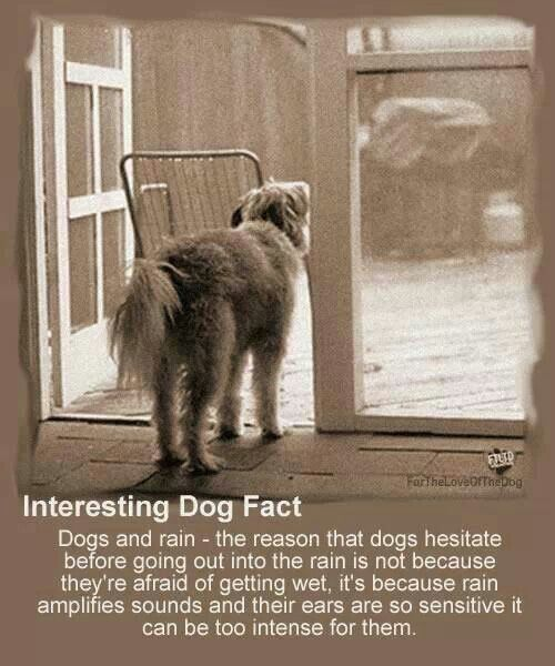 This Definitely Applies To My Dog He Will Not Go To The Bathroom All Day If It S Raining Outside Dog Facts Pets Dogs