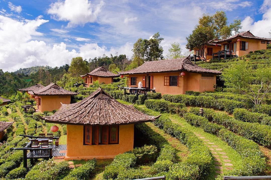 Ngắm nhìn ngôi làng trên đồi chè thần tiên đẹp đến nao lòng ở Thái Lan | Bài viết | Foody.vn
