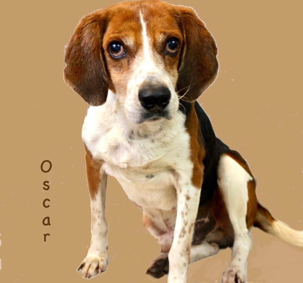 Adopt Oscar On Pet Rescue Dogs Dogs Kids Animal Welfare League