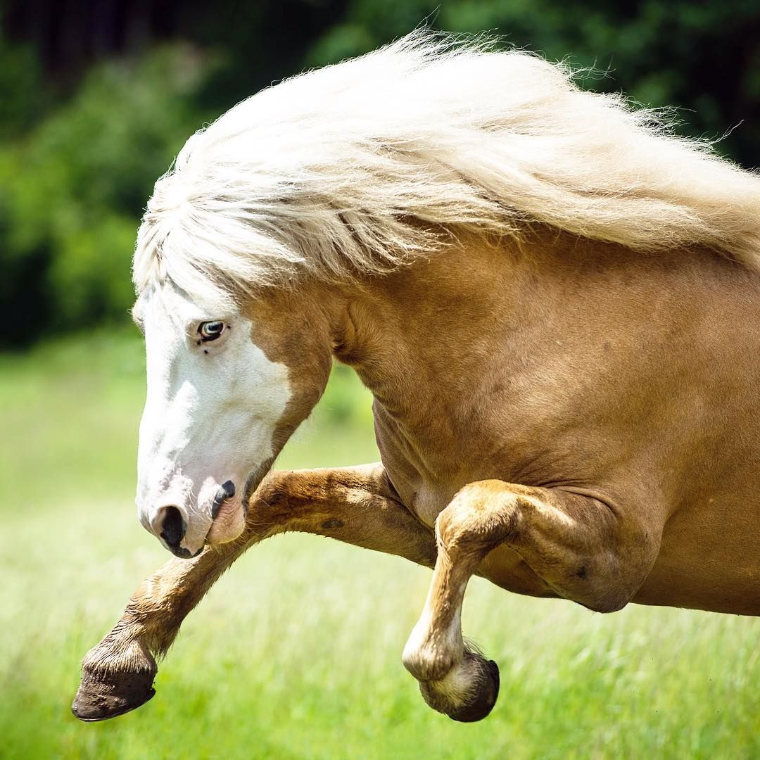PferdeBild von ingolffee auf Isländer Tiere, Pferdefreunde