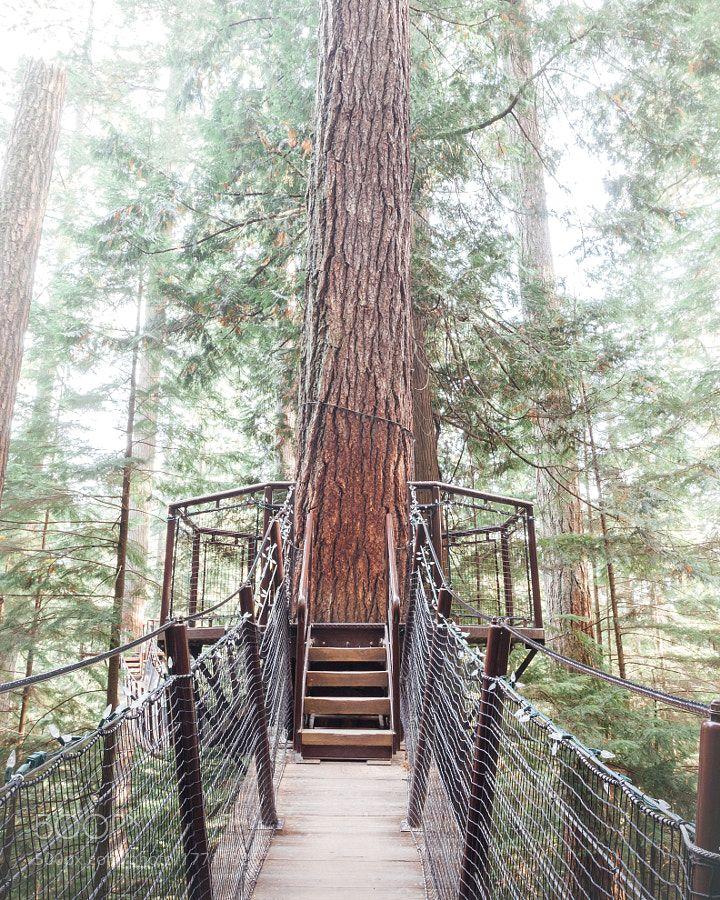 Treehouse | Tree house, House styles, Landscape
