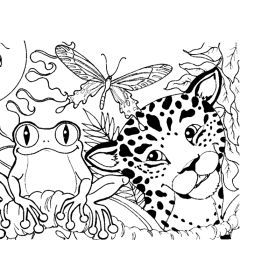 Rainforest Coloring Sheets Free Pages Book
