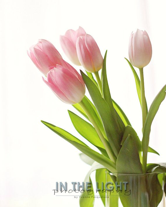 Pink Spring Tulips 1  Fine Art Photography by InTheLightPhoto