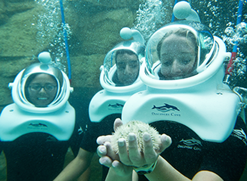 Discovery Cove Is A One Of Kind Experience Where You Can Swim With Orlando Floridaorlando Theme Parksorlando