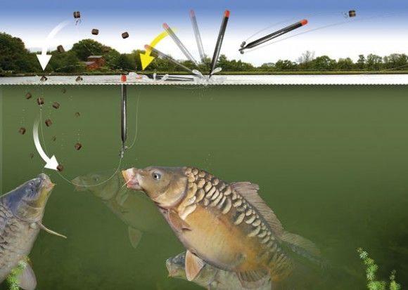 1000+ images about fishing carp on pinterest | feed corn, carp, Fishing Bait