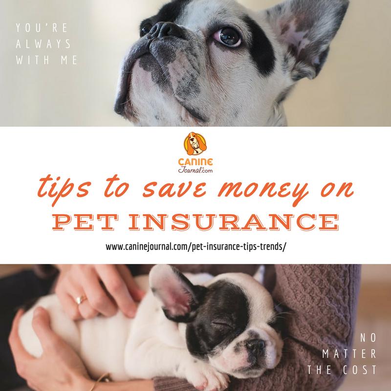 Pin On Pet Insurance Health