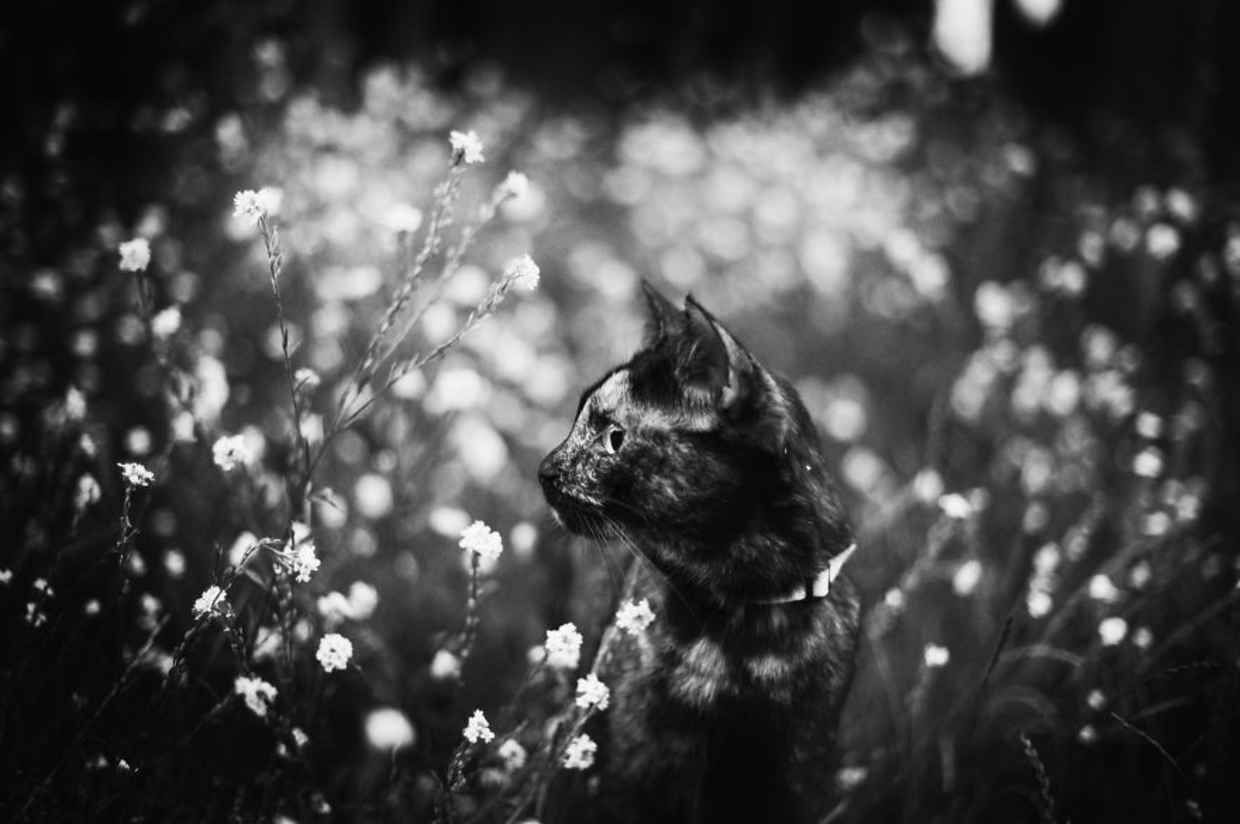 Beautiful Photos Show Why You Should Never Leave the Cat