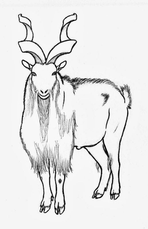markhor drawing markhor national animal of pakistan worksheet
