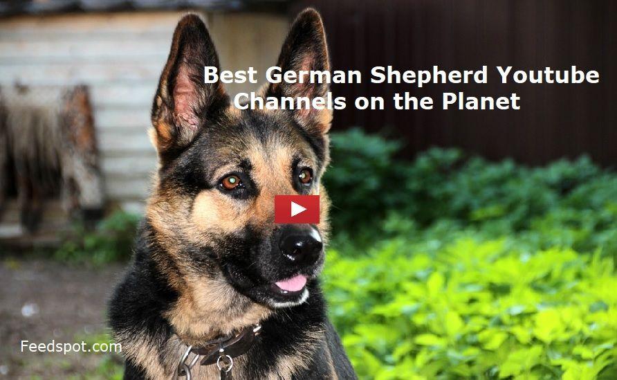 Top 15 German Shepherd Youtube Channels To Follow In 2020