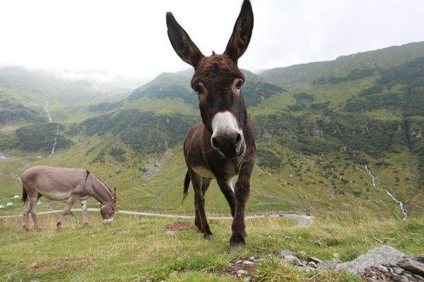 Guys, Lindsay Lohan Was Right: Donkeys ARE Beautiful