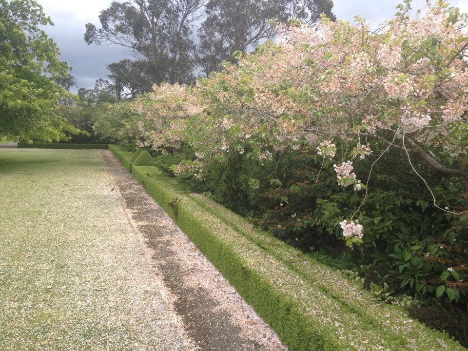 Bryan Johnston Design, Wellington NZ Outdoor gardens