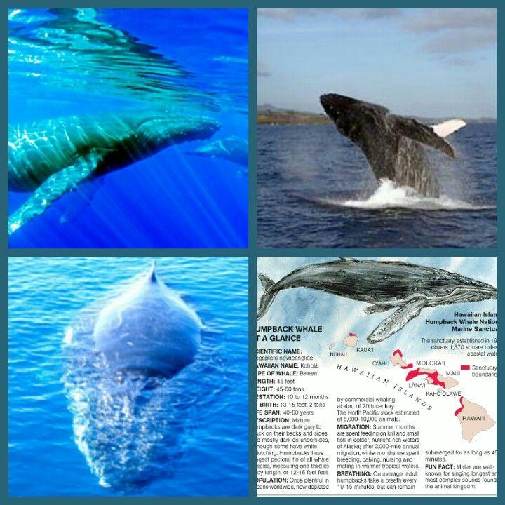 Humpback Whale Tour on Kauai..
