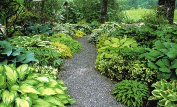 plantas de sombra plantas interior da casa Pinterest Gardens
