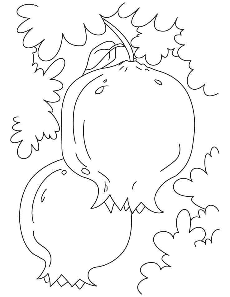 Pomegranate Fruit Picture Coloring Pages 2 Games The Sun Games