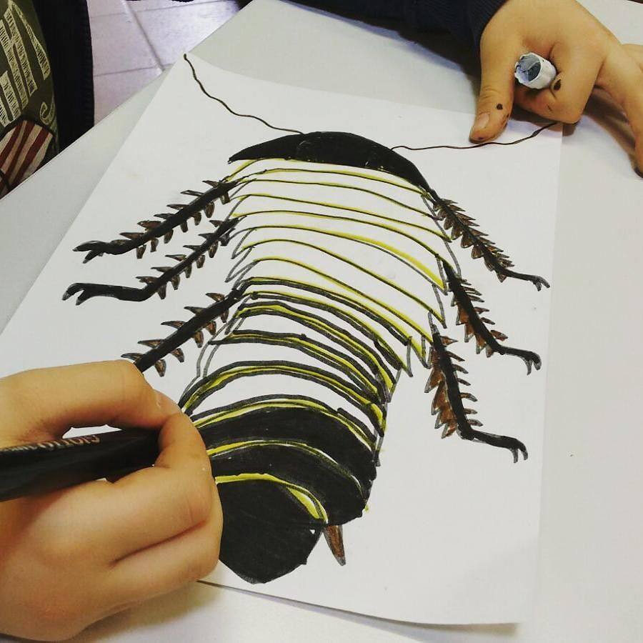 #educazione #scuola #scienza #natura con le blatte giganti in #museo