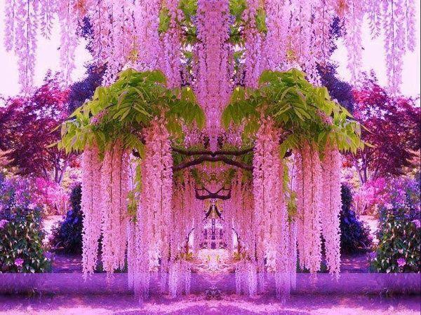 Simply incredible wisteria garden