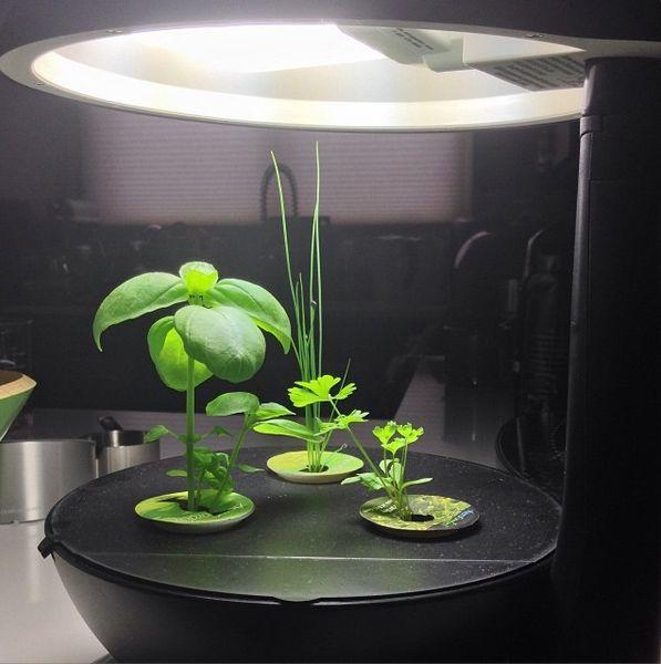 I M Growing Aerogarden Gourmet Herbs Otlar 400 x 300