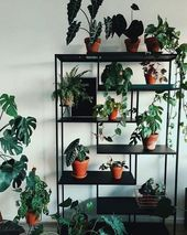 72 Most Amazing Indoor Plants Wall Garden Decoration Ideas Page 3 of 72Skincare