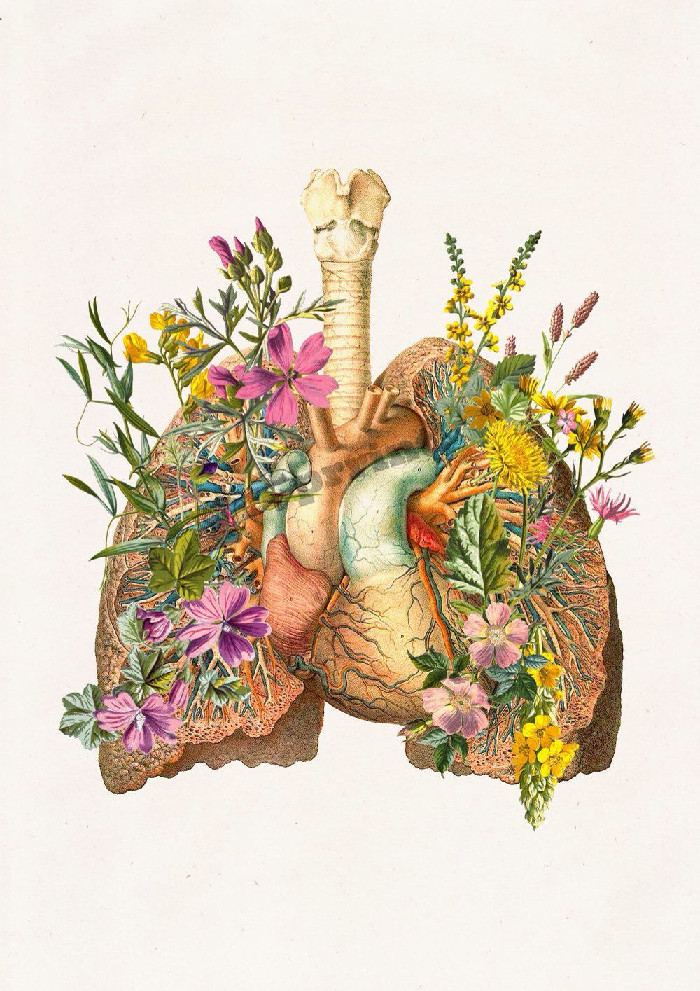 Lungs and heart with flowers [PRRINT] | Anatomy | Pinterest | Lungs ...