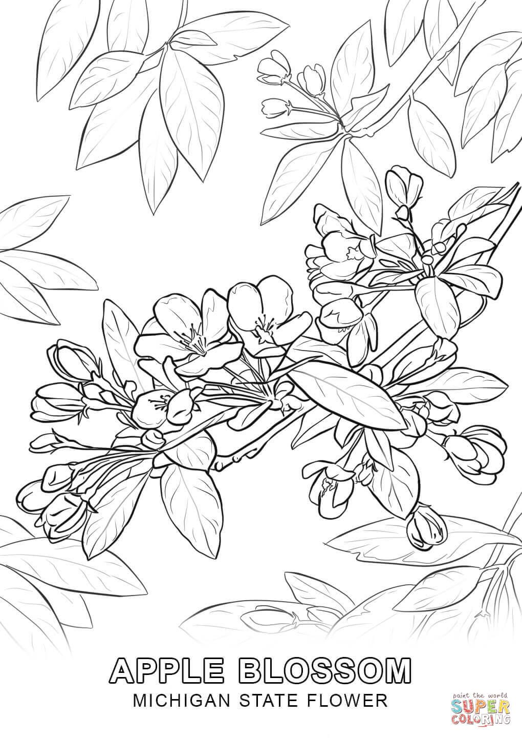 michigan state flower coloring pagejpg 10201440