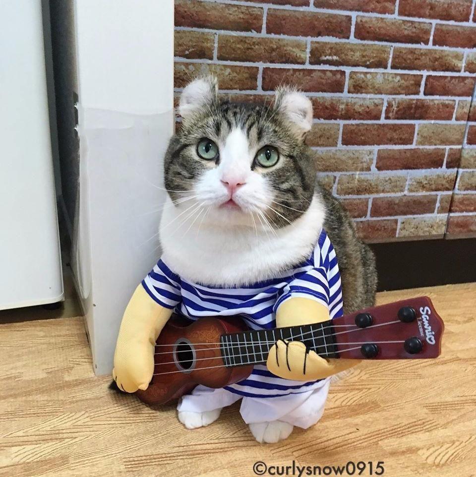 Cat Costumes Guitar Player Cat Toy Cat Costumes Cute Cat Costumes Cat Toys