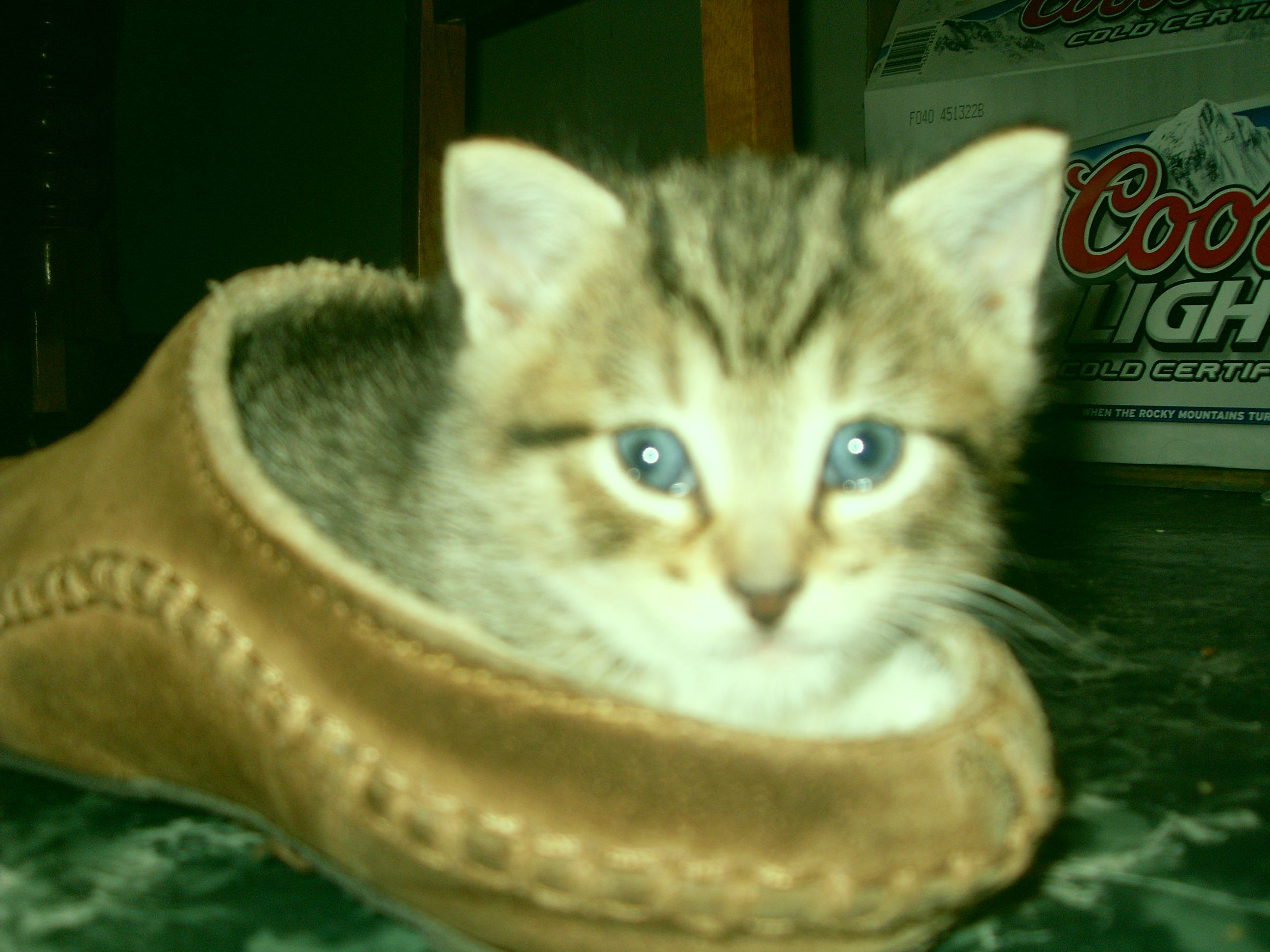 chillen in a slipper!