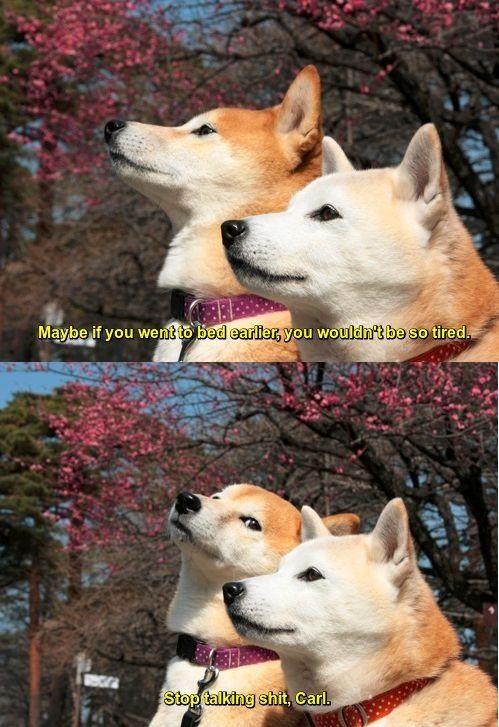 Lol Stop Talking Shit Carl Dog Jokes Animal Jokes Funny Dog Memes