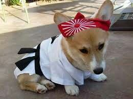 Have to find this costume for Seeley!