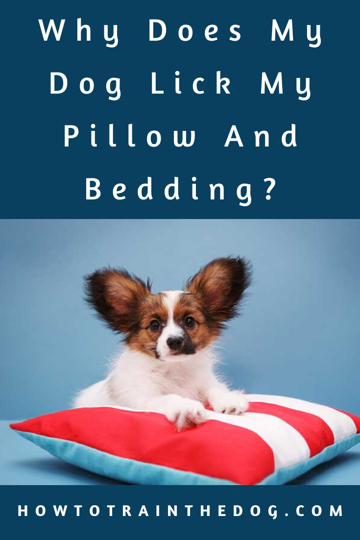 Why Does My Dog Lick My Pillow And Bedding 6 Reasons Dogtraining Puppytraining In 2020 Dogs Training Your Dog Puppy Training