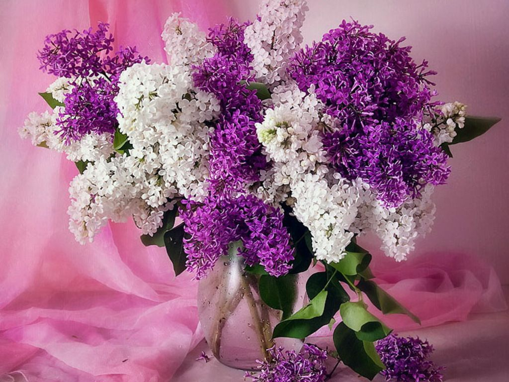 download wallpaper lilac bouquet - photo #21