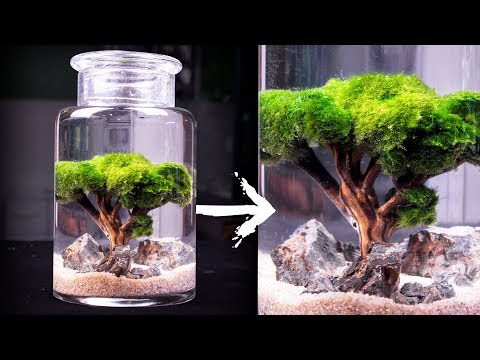 Pin By Ivy On Random Crafts And Stuff Marimo Moss Ball Terrarium